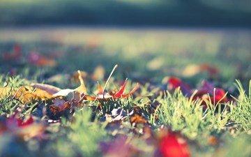 grass, nature, leaves, macro, autumn