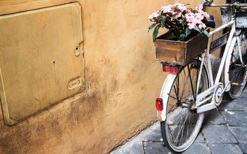 цветы, велосипед, ящик