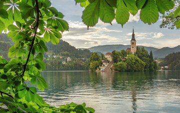water, lake, branch, tree, leaves, summer, church, island, alps, slovenia, chestnuts, bled