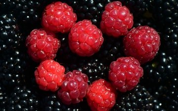 macro, raspberry, berries, blackberry