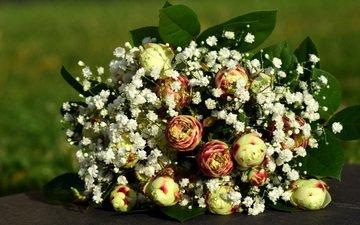 цветы, листья, букет, ранункулюс, лютик, гипсофила