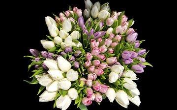 цветы, черный фон, букет, тюльпаны