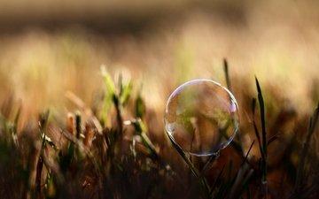 трава, природа, размытость, мыльный пузырь