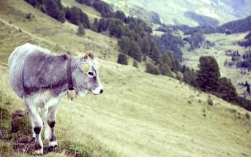 трава, деревья, рога, корова, бык