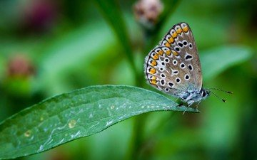 насекомое, бабочка, крылья, лист, растение
