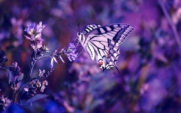 цветы, насекомое, бабочка, крылья, размытость