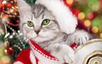 новый год, кот, мордочка, усы, кошка, взгляд, котенок