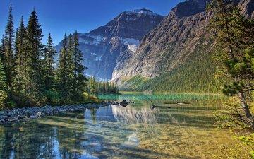 деревья, озеро, горы, природа, лес