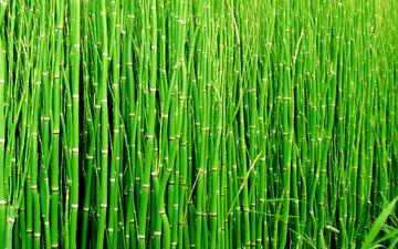 макро, бамбук, стебли