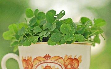 кружка, листочки, растение