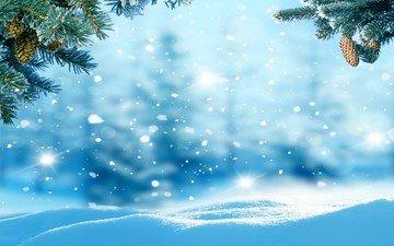 schnee, natur, wald, needles, winter, am, beulen