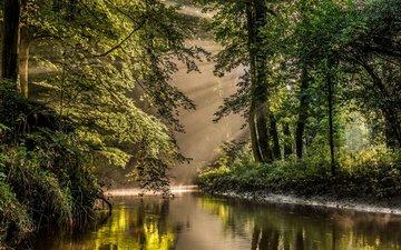 река, природа, лес