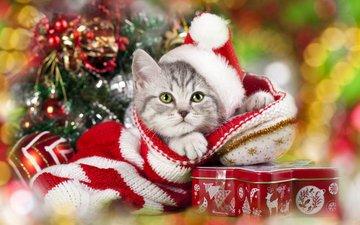 новый год, елка, кот, мордочка, усы, кошка, взгляд, подарки, котенок, колпак