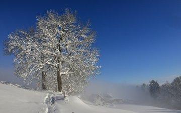 снег, природа, дерево, зима, markus bruggmann