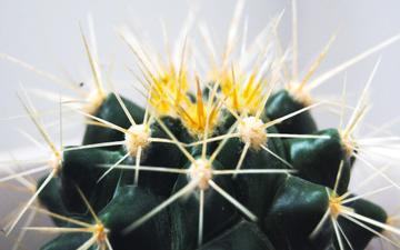 macro, flower, barb, spikes, cactus