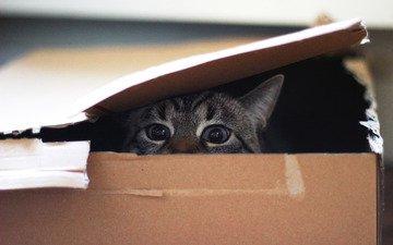 глаза, кот, мордочка, усы, кошка, взгляд