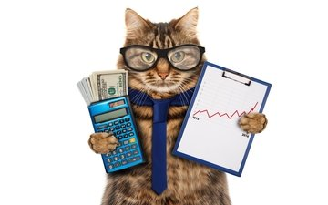 cat, muzzle, mustache, look, glasses, humor, white background, money, dollars, tie, schedule, calculator, accountant