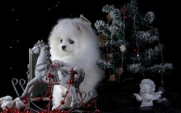 new year, tree, muzzle, look, dog, puppy, black background, toys, horse, spitz