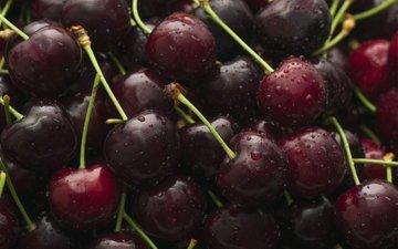macro, drops, cherry, berries