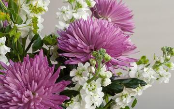 flowers, bouquet, chrysanthemum