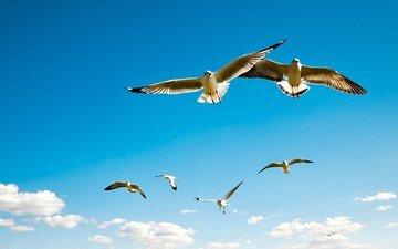 небо, облака, полет, крылья, птицы, чайки