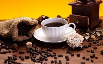 flower, coffee, bag, cup, coffee beans, sugar, coffee grinder