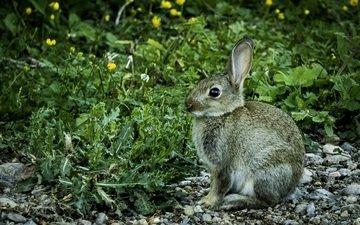 цветы, трава, камни, кролик, животное, заяц