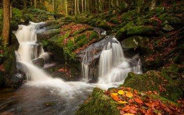 река, природа, камни, лес, листья, водопад, осень, мох