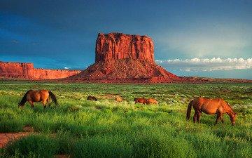 трава, скалы, пейзаж, каньон, лошади, кони, долина монументов