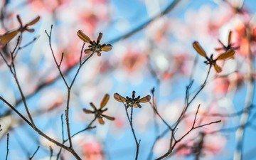 листья, макро, ветки, размытость