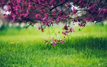 трава, природа, цветение, ветки
