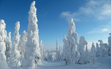the sky, trees, snow, nature, forest, winter