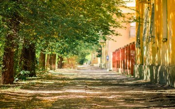 trees, trunks, the city, street, bokeh