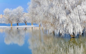 trees, lake, nature, winter, reflection, landscape, frost, willow, ordache