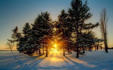 солнце, снег, природа, лес, зима, рассвет, канада, viktor elizarov