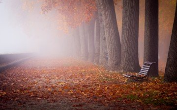 trees, nature, leaves, landscape, park, fog, trunks, autumn, bench