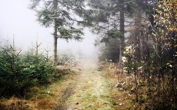 road, trees, plants, forest, fog, the way