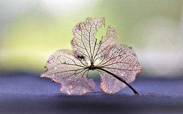 nature, leaves, macro, flower, veins, dry