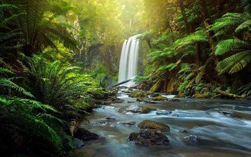 river, nature, forest, waterfall, australia, fern