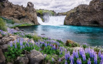 flowers, river, nature, waterfall