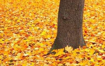 nature, tree, leaves, park, autumn
