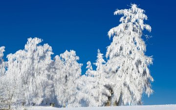 the sky, trees, snow, nature, forest, winter, frost