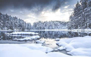 trees, river, snow, nature, forest, winter, aamarius kaniewskis