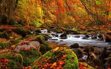 деревья, река, природа, камни, лес, листья, пейзаж, осень, мох
