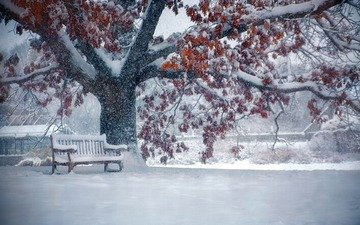 snow, nature, tree, leaves, winter, park, branches, bench