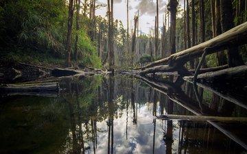 деревья, река, природа, лес, отражение, стволы, бревна, roy_chang