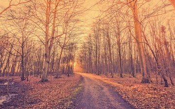 road, nature, forest, park, autumn, kasper nymann
