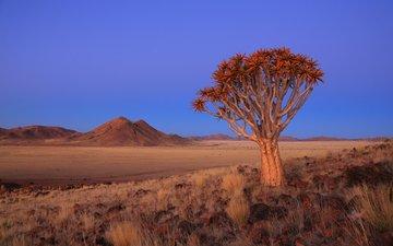 небо, дерево, пейзаж, пустыня