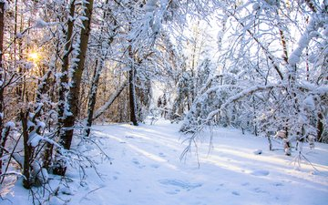 природа, лес, зима, valery chernodedov