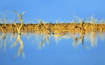 the sky, trees, lake, nature, reflection, australia, driftwood